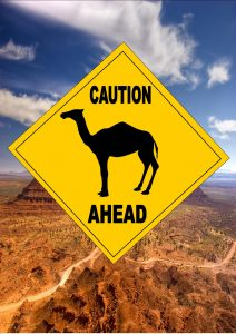 camel warning signs