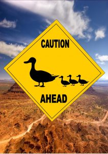Caution Ducks ahead Sign